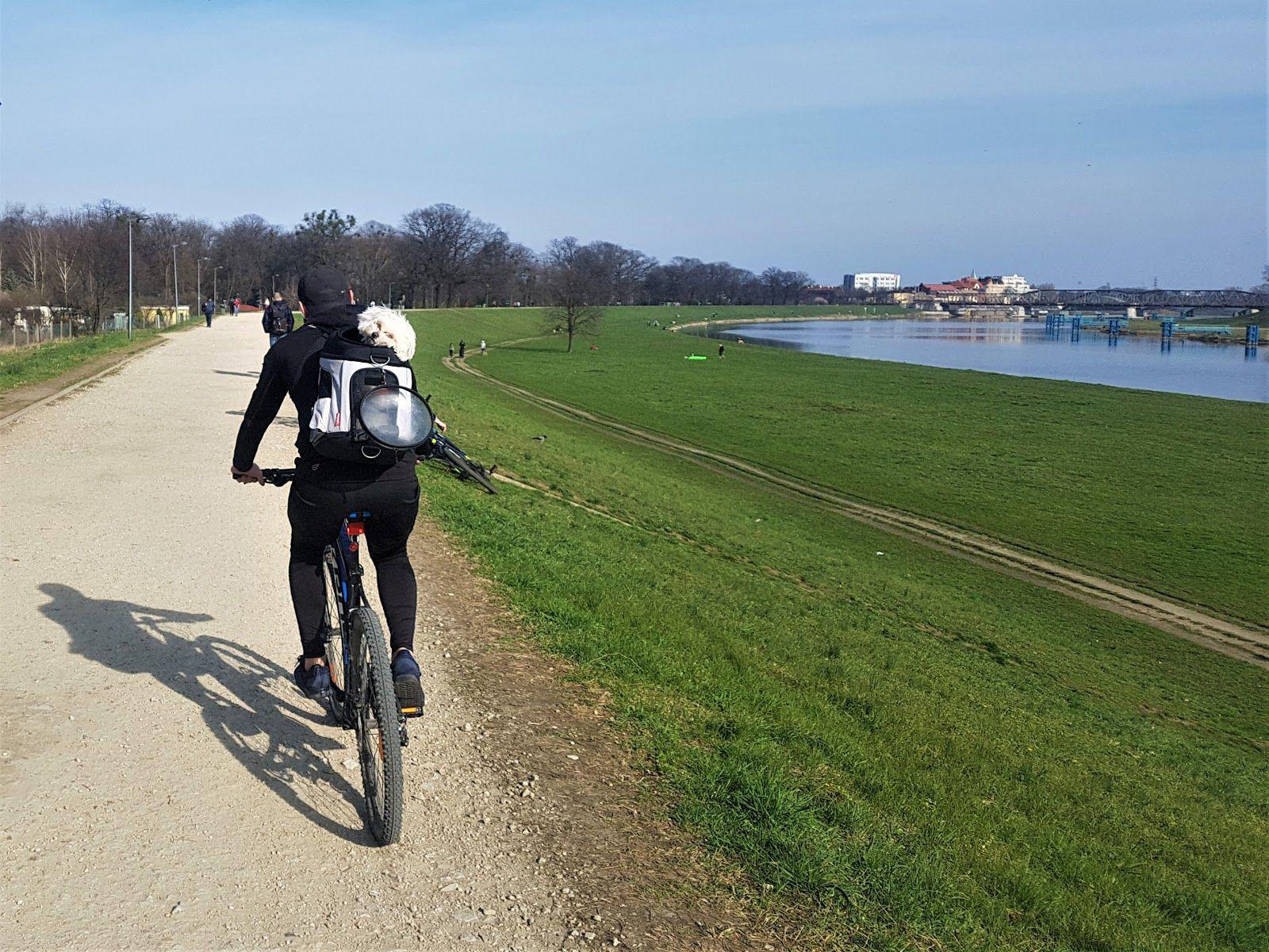 rowerzysta nad odrą